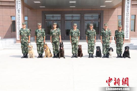 哈尔滨警犬训练基地7只警犬参加杭州G20安保任务 孟繁宇 摄