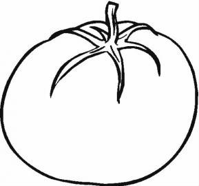 西红柿 大丰收 收购价跌至冰点