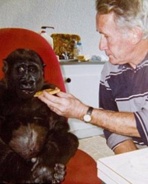 与大猩猩生活的18年