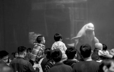 昨天,动物园在科普馆举行关爱保护动物主题活动,活动现场开展了看图识