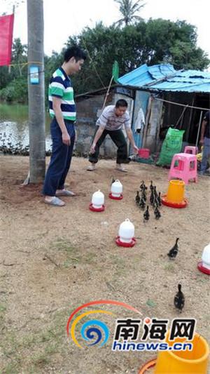 道灶村第一书记王吉球(左)与陈明书(右)精心照看鸭苗。
