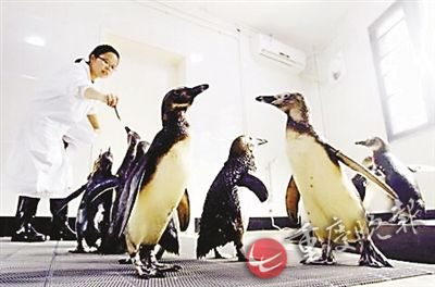 动物园企鹅宝宝