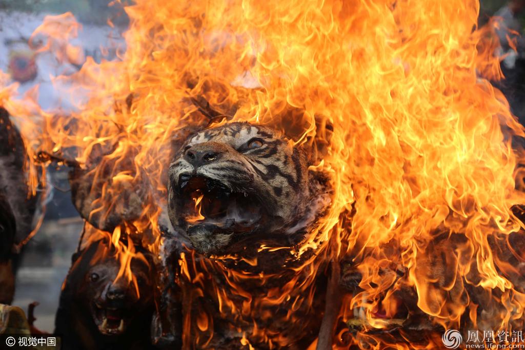 印尼政府打击野生动物走私 焚毁动物制品