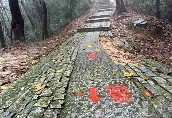 游步道上留下的多处红漆喷制的赛事logo和路标箭头。 几天前在杭州西湖景区群山间举行的一项越野赛,在游步道上留下200多处红漆喷制的赛事logo和路标箭头。11月23日,承办方之一的杭州某文化策划公司负责人告诉澎湃新闻(www.thepaper.cn),当天将把所有标识清除干净。