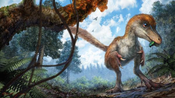 琥珀中发现恐龙化石