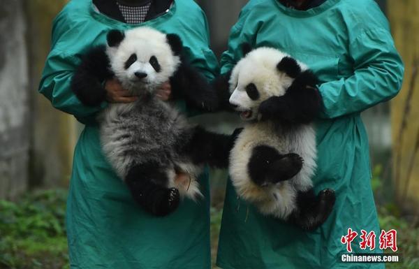 重庆杨家坪动物园内的