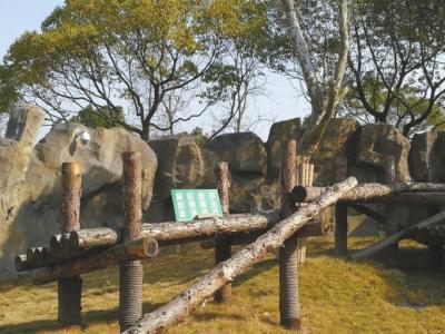 """上海野生动物园回应""""10年养死5只熊猫"""":概率问题"""