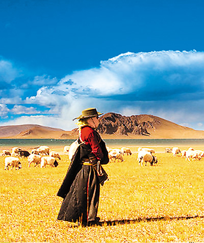 美丽的藏族姑娘在放牧.