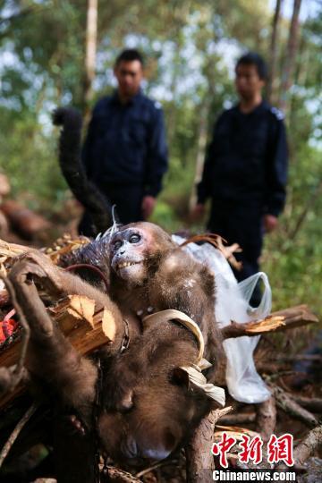 西双版纳销毁一批野生动物死体及其制品