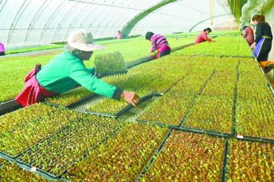 西瓜种植方法步骤图解