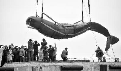 惠州搁浅抹香鲸已死亡_凤凰资讯