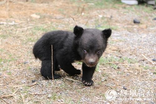 青岛森林野生动物世界新生萌兽 清明或与游客见面