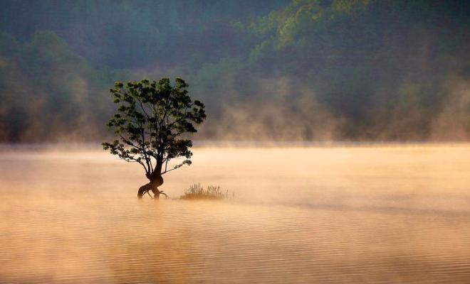 安徽黄山奇墅湖雾气氤氲宛若仙境