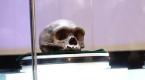 河北地质大学科学家发现似海德堡人头颅化石
