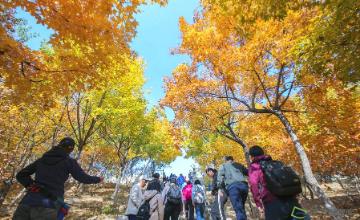北宫国家森林公园美成了人间仙境了