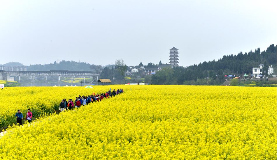 游客们纷纷放慢脚步,尽情徜徉在花海中。