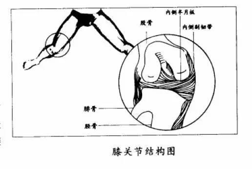 脚腕韧带结构图