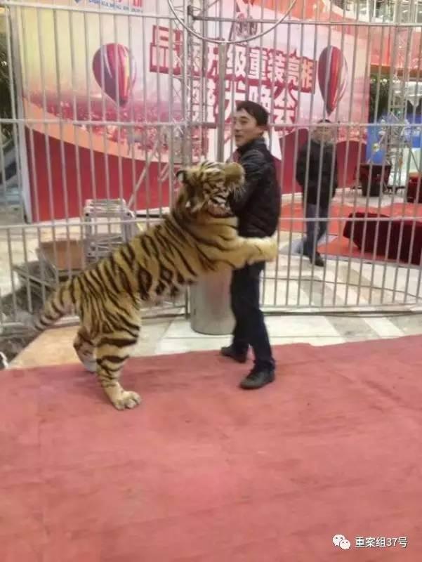 因非法运输珍贵,濒危野生动物罪被判刑10年的马戏团团主李荣庆.
