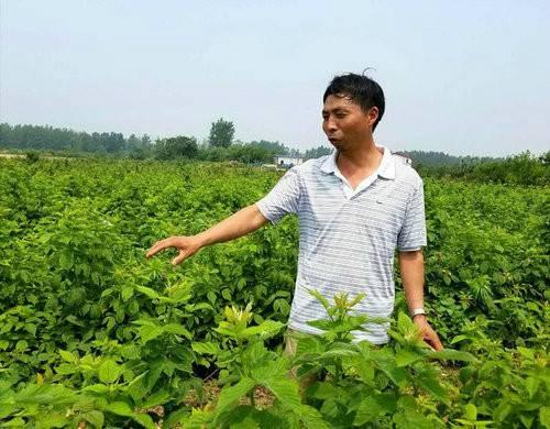 邂逅封丘长寿之乡,刚摘树莓果又品树莓饮料乐哉!