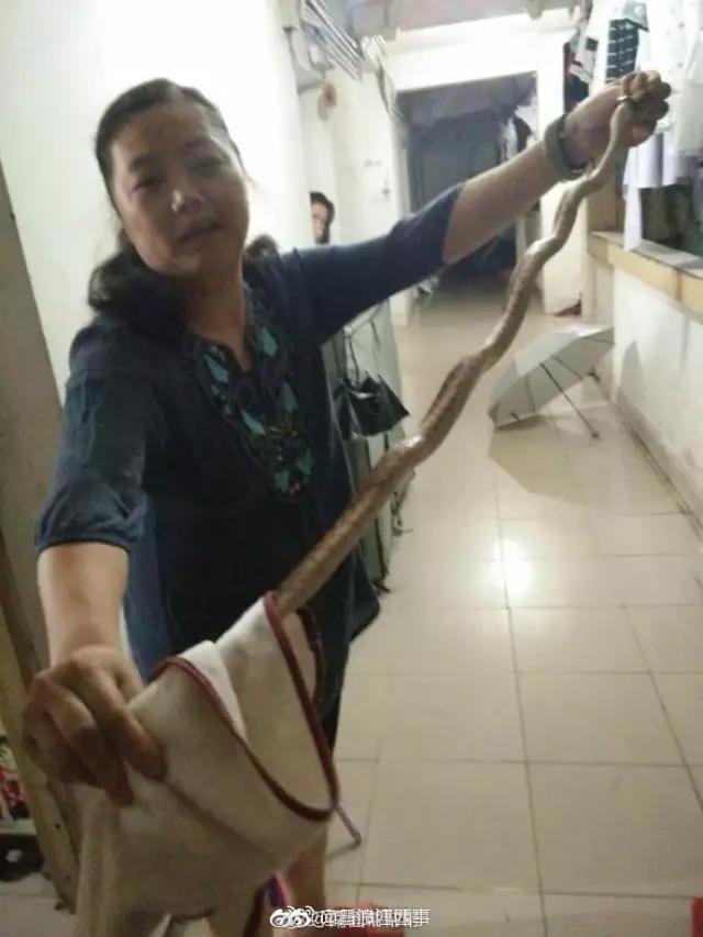 大蛇夜闯江西一高校宿舍女教师徒手擒蛇做成夜宵