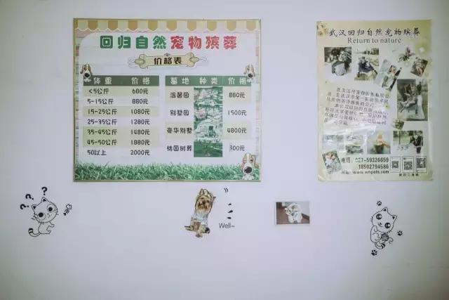 """武漢每年失""""寵""""4000只,僅有1/10體面安葬"""