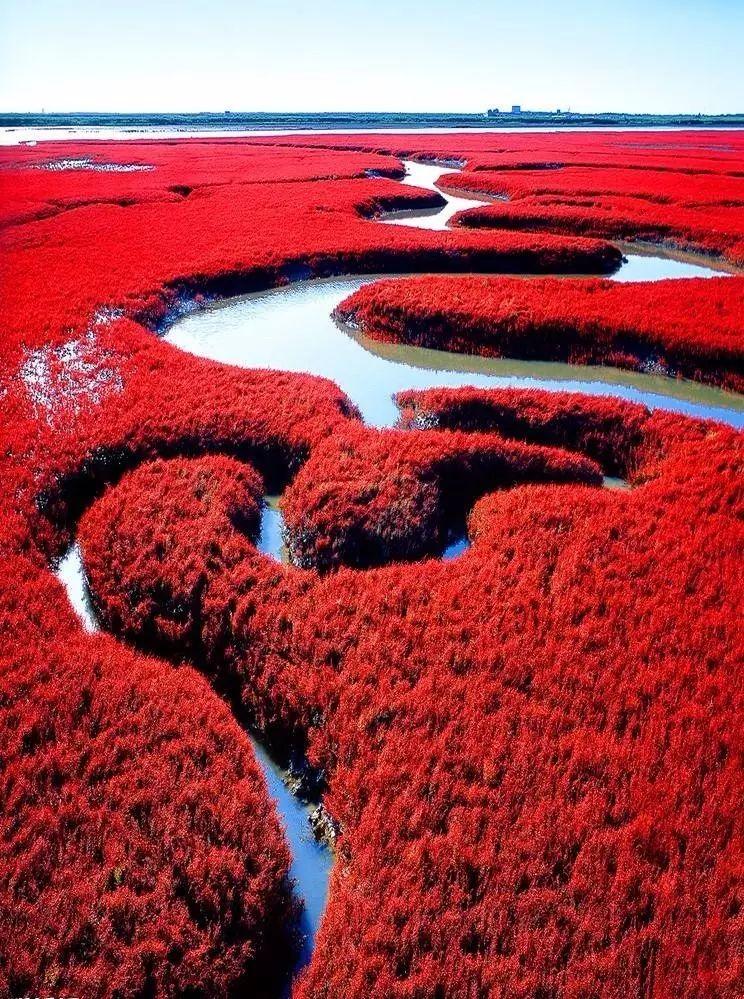 """这里是亚洲最大的芦苇荡和红海滩,是国内""""最红""""的地方,也是观赏丹顶鹤"""