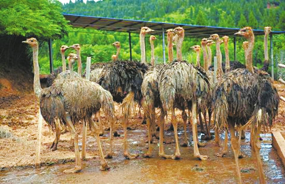 蓬安野生动物园上凤凰网了