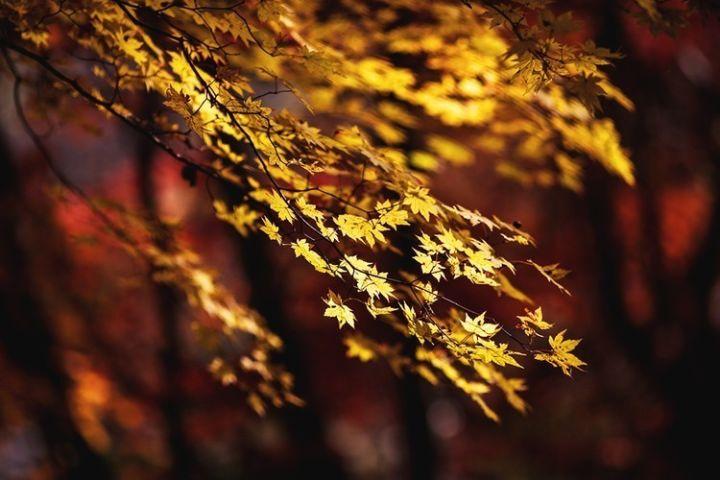 被誉为东北318的秋日童话高速 从长白山一路美醉到中朝边境