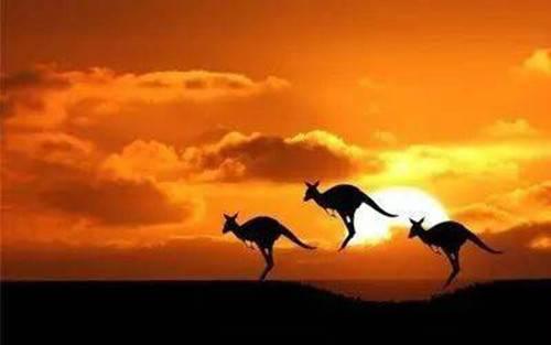 冬季到南半球看袋鼠 郑州直飞澳洲墨尔本旅游推介会盛大举行