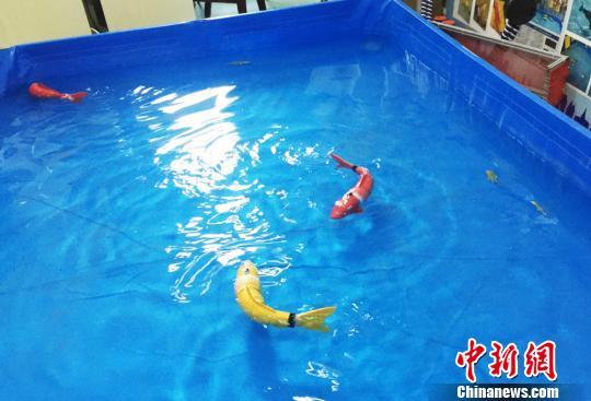 甘肃高校师生研发仿生机器鱼可应用多领域(图)