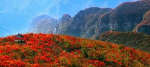 秋雨连绵 青天河漫山红叶别具韵味 静等你来