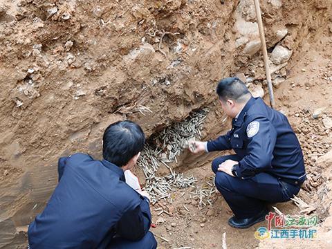 工地挖出4万发子弹