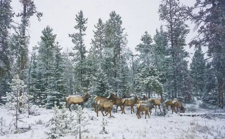 签证含金量超高的国家 今年冬天去所有国家公园全免费!