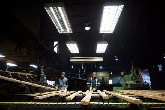 ▲资料图片:加拿大不列颠哥伦比亚省枫树岭一家工厂的工人正在分拣木材。 加拿大木材出口已成为美加两国贸易纠纷的原因之一。(美联社)