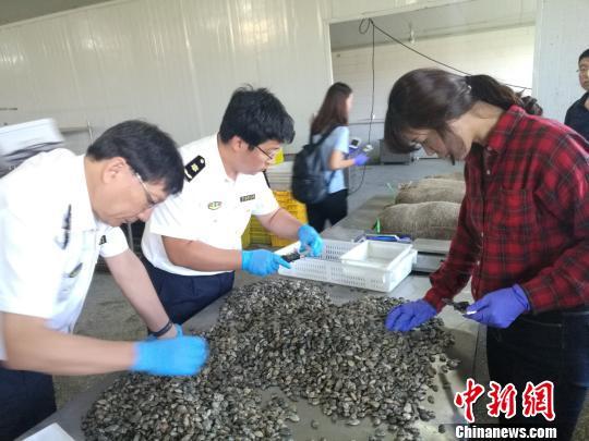 辽宁全省动植物种类繁多,水产品、矿产资源丰富。 张柏琪摄
