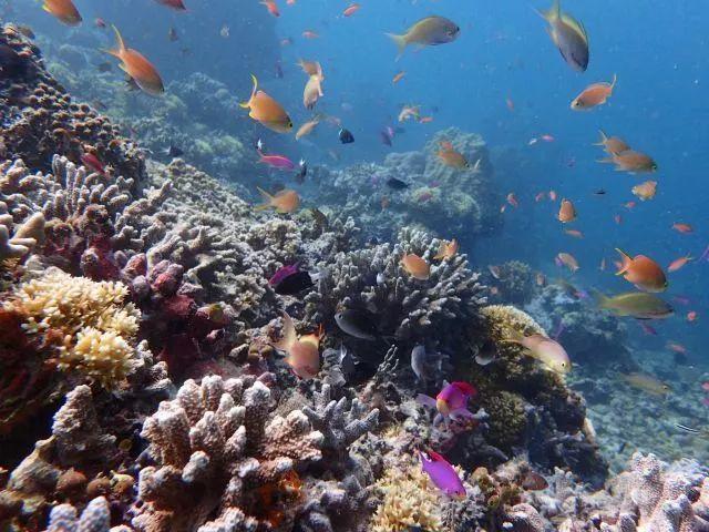 潜入深海 从这10处开启另一个世界的旅行