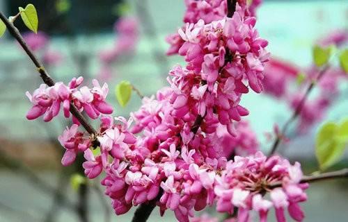 尧山各种花儿竞相绽放喜迎八方游客前来观赏