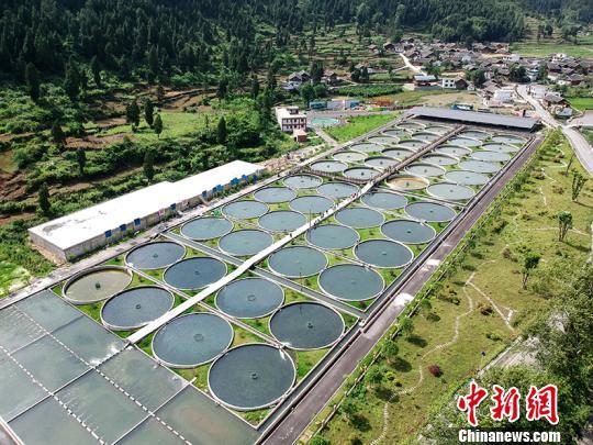净河村冷水鱼养殖基地。杨昌鼎摄