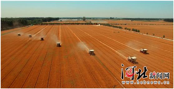 河北省小麦收获过半抢收抢种成今年显著特点