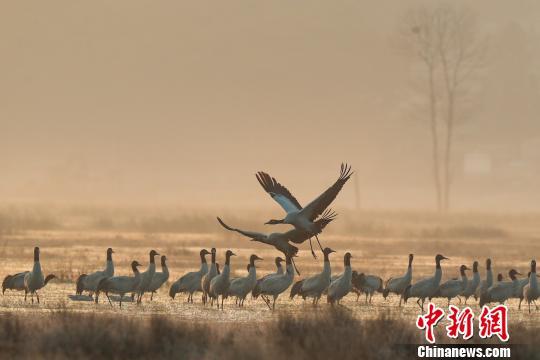图为贵州威宁草海,是典型的高原湿地生态系统。 贺俊怡摄