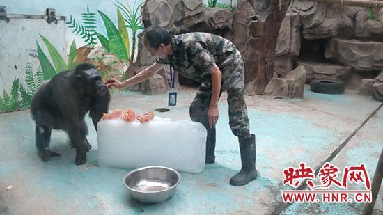 炎炎夏日 郑州动物园为动物降温解暑有妙招_河南频道