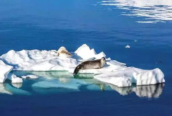 除了看企鹅和北极熊 还能在南北极干什么?
