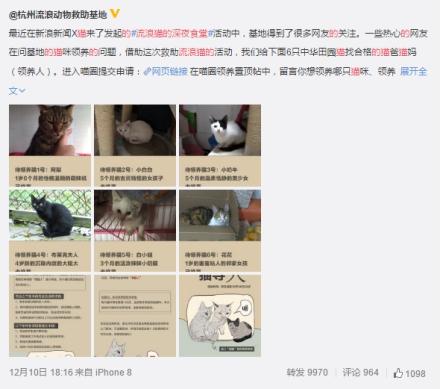 """流浪猫救助在行动 新浪新闻""""圈子""""助力社会公益发酵"""