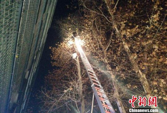 湖北襄阳:男子爬树救流浪猫被困消防架梯救人