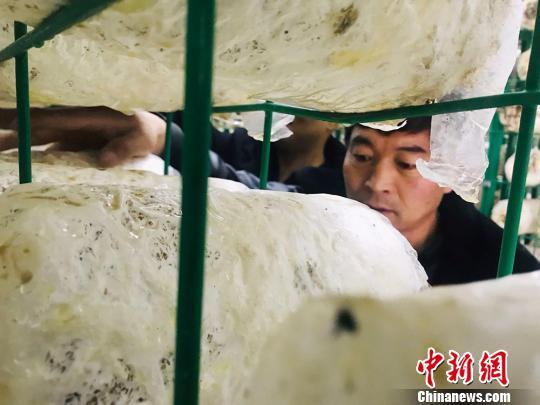 图为在甘肃兰州市榆中县马坡乡尖山村建设的食用菌种植工厂。 艾庆龙摄