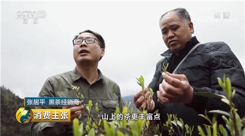 CCTV央视走进安化黑茶香木海茶园!只为寻找好茶标准!
