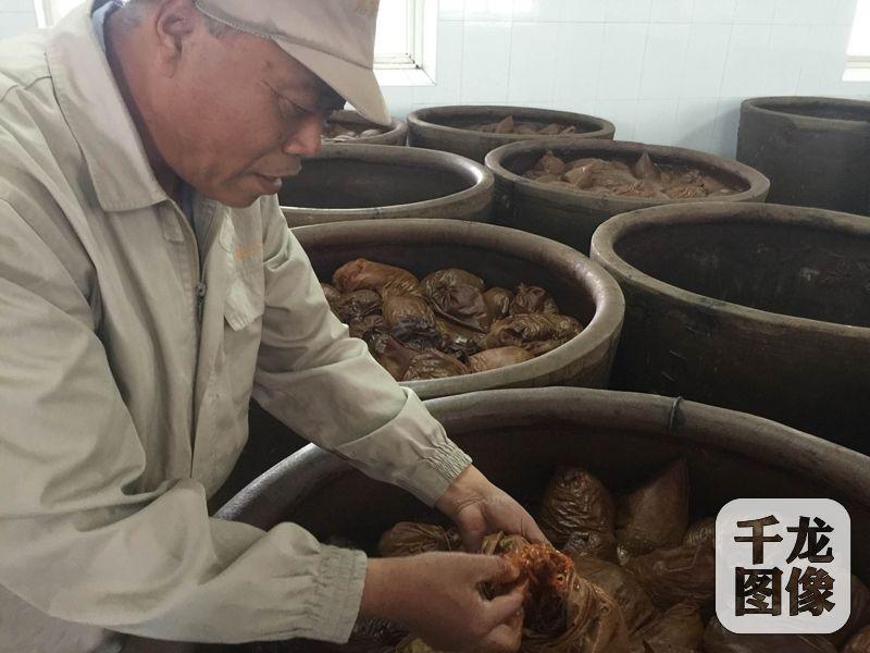 位于北京城南的六必居传统酱菜厂,保留着纯手工制作酱菜。图为杨银喜向记者展示装在布袋子里正在酱制的苤蓝丝,酱制完成以后,加上配料就变成了市场上销售的麻仁金丝。千龙网记者秦胜南摄