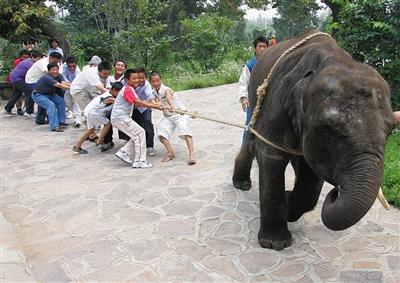 中国野生动物园开启3.0版本