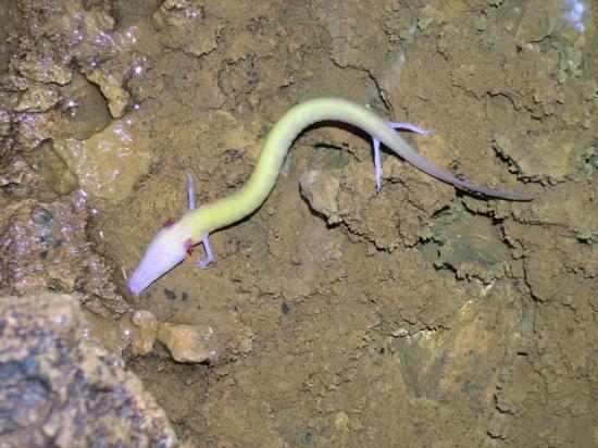 男子野外发现外型像龙的生物,调查后结果惊人!