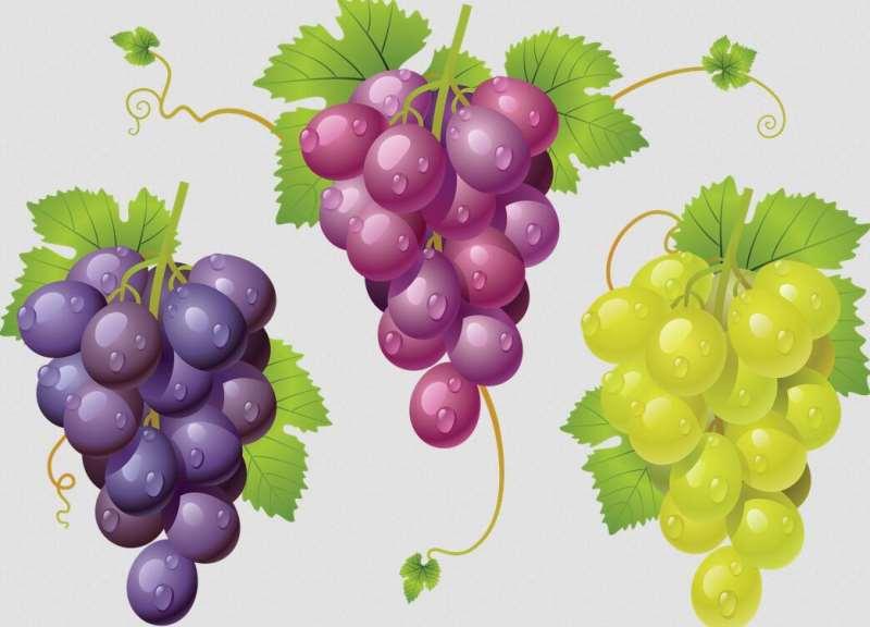 我的葡萄酒为什么是这种颜色?
